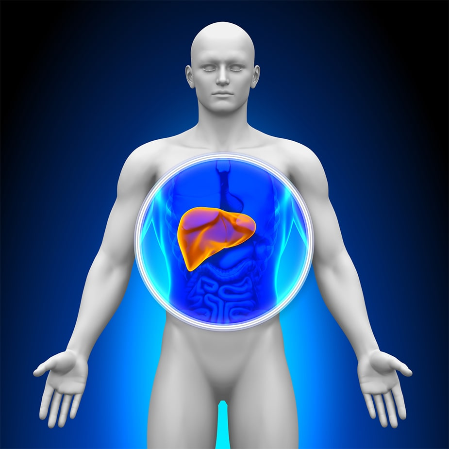 High Liver Enzymes: How to Optimize the Health of Your Liver