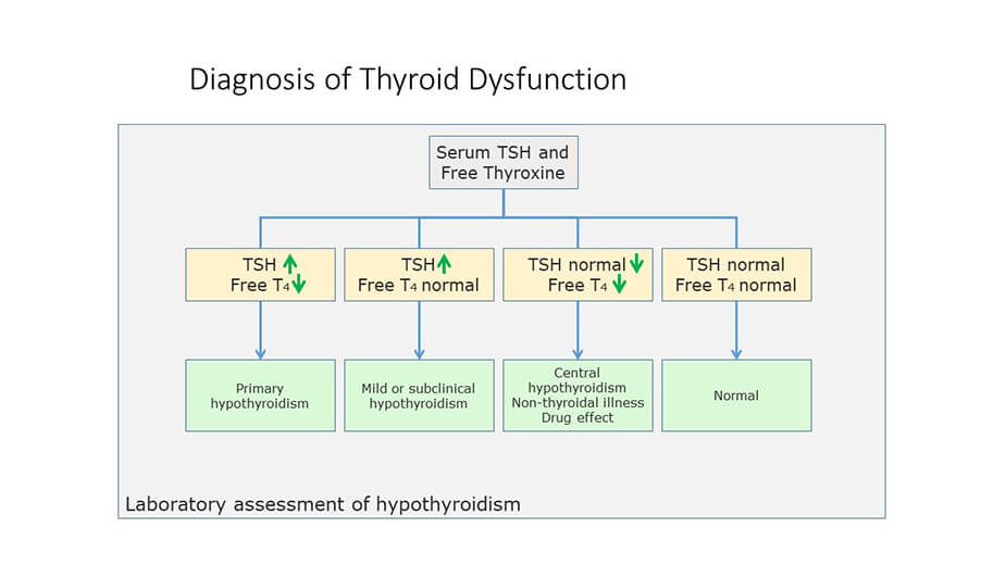 Thyroid Lab Tests Types And Controversies Discounted Labs