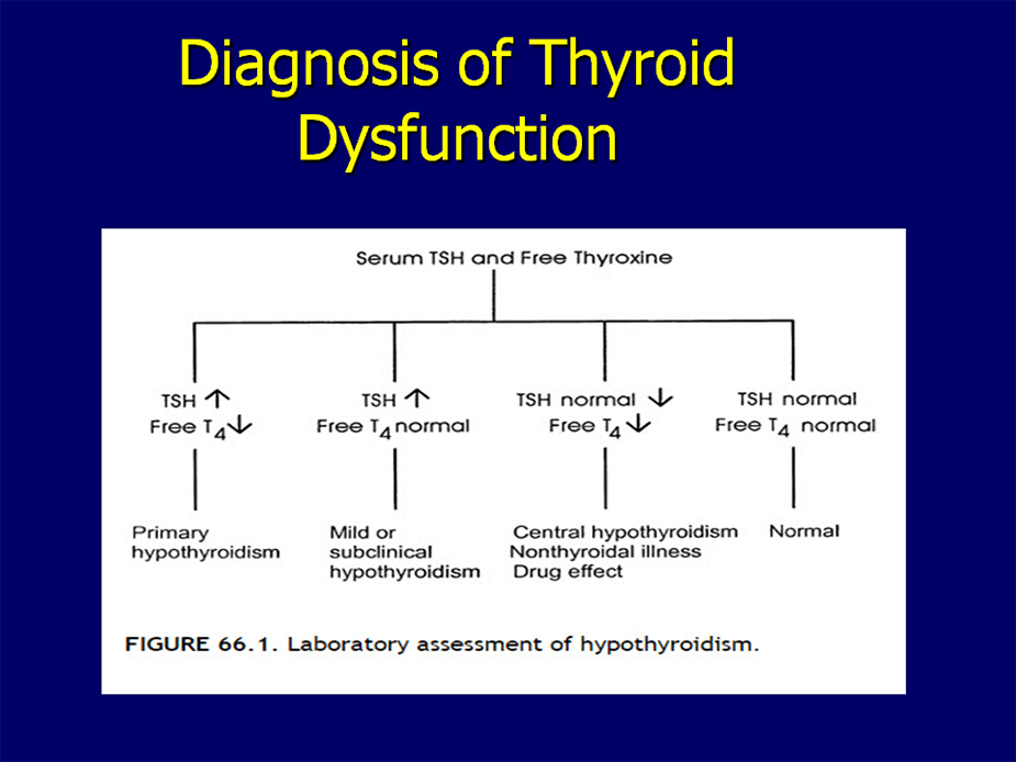 Thyroid Tests And What They Mean Discounted Labs